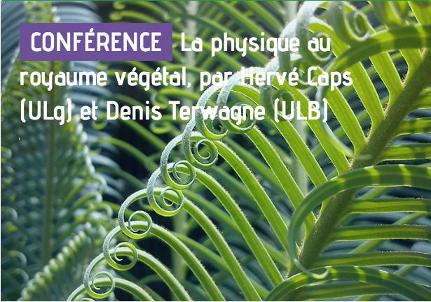 Conférence grand public – la physique au royaume végétal